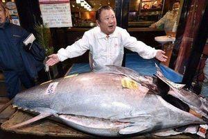 Lý do tỷ phú Nhật Bản mạnh tay chi hơn 41 tỷ đồng mua cá ngừ 'khủng'