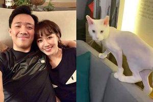 Trấn Thành đòi đưa Hari Won 'ra tòa' vì hành động với mèo cưng khi chồng vắng nhà