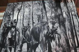 Ngày tết con trai Ama Kông kể chuyện săn voi trắng