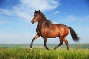 Lí do gì khiến ngựa thích ngủ đứng?