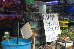 Cá chép đắt hàng trước ngày ông Công ông Táo