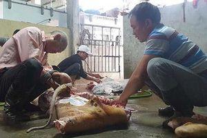 Giá thịt lợn tăng cao, người miền Bắc 'đụng'... trâu, bò ăn Tết