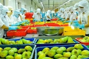 Năm 2020, xuất khẩu rau, quả đặt mục tiêu 5 tỷ USD