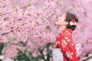 Ikigai và lý do bạn thức dậy mỗi sáng