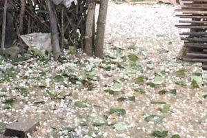 Gần 12.000 gia đình 'mất Tết' vì dông lốc, mưa đá