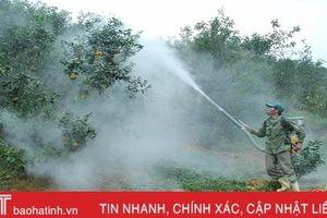 Vũ Quang phấn đấu có thêm 200 ha cam trồng theo tiêu chuẩn VietGap