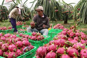 Người Hàn Quốc tại Việt Nam chung tay mở chiến dịch mua hoa quả Việt