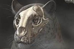 Phát hiện hóa thạch sư tử khổng lồ