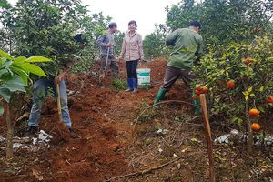 Hải Hà: Xây dựng nông thôn mới gắn với phát triển nông nghiệp toàn diện