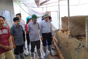 Lãnh đạo thành phố kiểm tra công tác phòng chống hạn hán, dịch cúm gia cầm tại huyện Cờ Đỏ và Vĩnh Thạnh
