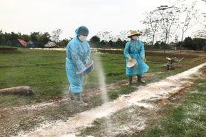Hà Nội xuất hiện thêm 1 ổ dịch cúm gia cầm tại huyện Mê Linh