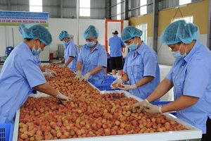 Nỗ lực tìm đường xuất khẩu nông sản