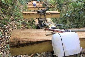Kon Tum: Khẩn trương điều tra vụ phá rừng tại tiểu khu 277, xã Đăk Rơ Nga