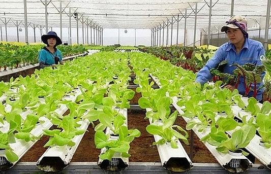 Hà Nội hưởng ứng Tháng hành động về an toàn vệ sinh lao động trong ngành nông nghiệp