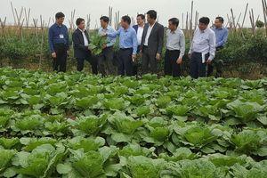 Vùng trồng rau an toàn Văn Đức cung cấp cho thị trường 70 tấn rau/ngày
