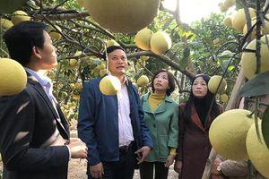 Hà Nội tháo gỡ khó khăn cho hợp tác xã nông nghiệp