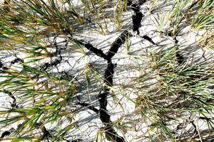 Nông dân tìm nước tưới cứu cây trồng do khô hạn đến sớm