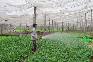 Hà Nội đứng đầu bảng xếp hạng bảo đảm an toàn thực phẩm nông, lâm, thủy sản