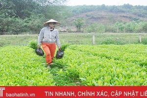 'Thời cơ vàng' để người dân Hà Tĩnh trồng 7.500 ha rừng