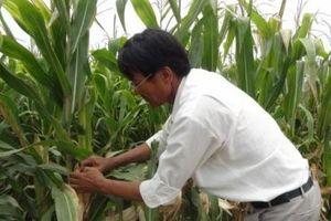 Đề phòng hạn hán, thiếu nước vào cao điểm mùa khô ở Đông Nam Bộ