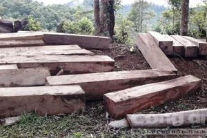 Phát hiện bãi gỗ lớn trong lô cao su