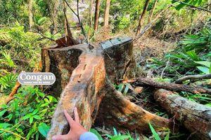 Vụ phá rừng đầu nguồn thủy điện Nước Oa: Chi cục Kiểm lâm Quảng Nam có 'dối trên, lừa dưới'?