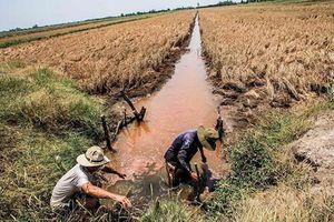 Bộ Tài nguyên và Môi trường kiến nghị giải pháp phòng chống hạn hán, xâm nhập mặn