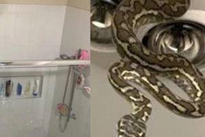 Đánh răng trong nhà tắm, đến lúc ngẩng đầu lên thì 2 đứa trẻ run sợ khi thấy thứ này trên trần nhà