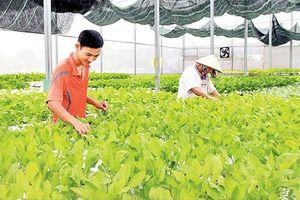 Bà Rịa - Vũng Tàu thu hút dự án nông nghiệp công nghệ cao