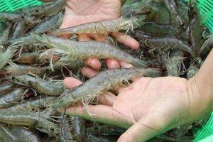 Phát hiện cơ sở nghi sản xuất giả thuốc nuôi trồng thủy sản