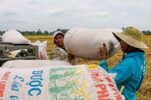 Kiến nghị cho doanh nghiệp FDI phân phối gạo ở trong nước