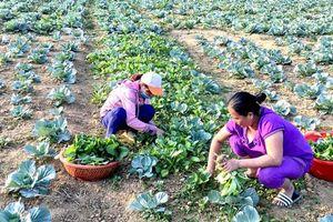 Tuyên Quang: Mở hướng làm giàu cho người dân Khâu Tinh