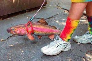 Dắt cá, gà mái, chó đồ chơi đi dạo để lách luật cấm ra đường