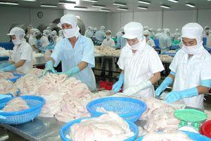 Hoa Kỳ giảm thuế cho doanh nghiệp xuất khẩu cá tra của Việt Nam