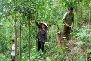 Cả nước thu 744,1 tỷ đồng phí dịch vụ môi trường rừng