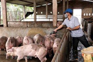 Lâm Đồng công bố hết dịch tả lợn châu Phi trên toàn tỉnh