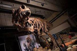 Tìm ra 'vua của các vị vua' trong thế giới khủng long bạo chúa