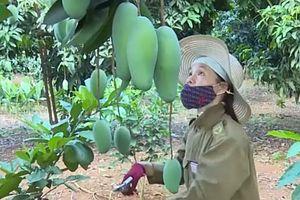 Sơn La tìm kiếm mở rộng thị trường xuất khẩu hoa quả