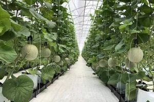 Cải tạo giống cây ăn quả chất lượng cao