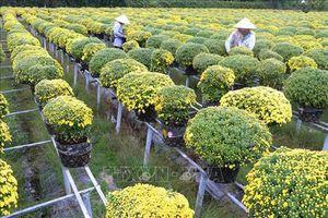 Đồng Tháp: Sản xuất hoa cảnh gắn với du lịch cho hiệu quả kinh tế cao