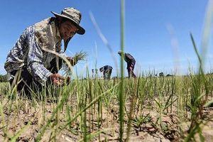 Thái Lan chi 4,5 tỷ USD hỗ trợ nông dân