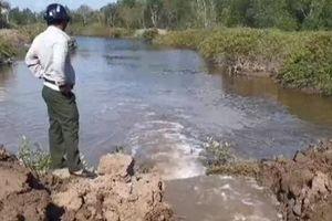 Đào kênh dẫn nước vào cứu rừng phòng hộ ven biển