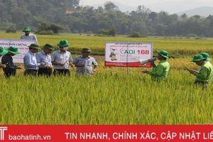 Hương Khê 'ngắm đích' 11.400 tấn lương thực vụ hè thu 2020