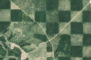 Cánh rừng độc đáo có hình bàn cờ ở Mỹ