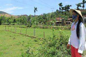 Đà Nẵng loay hoay gỡ rối hàng trăm héc-ta đất hoang