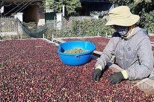 Cà phê tiếp tục xu hướng tăng giá