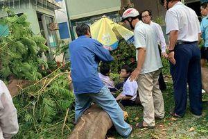 Thông tin mới nhất về tình hình các học sinh bị thương do cây phượng trong trường bật gốc đè trúng
