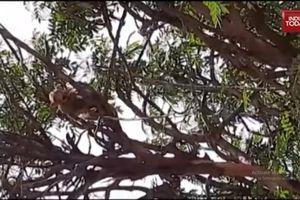 Khỉ đánh cắp mẫu máu Covid-19 từ phòng thí nghiệm ở Ấn Độ