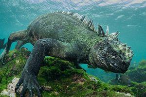 Quái vật Godzilla ngoài đời thực hóa ra ở ngay gần con người