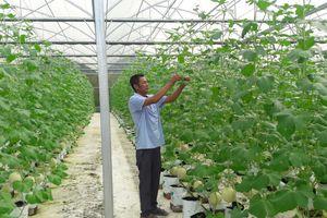 Xây dựng nền nông nghiệp công nghệ cao gắn liền với du lịch sinh thái